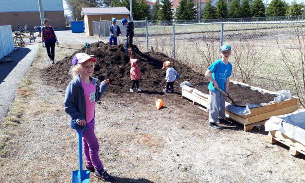 Jardin communautaire à l'école alternative Harricana d'Amos