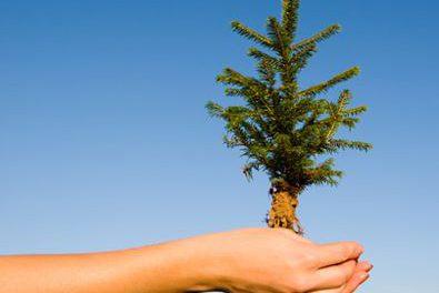 L'Abitibi-Témiscamingue et le Nord-du-Québec célèbrent le Mois de l'arbre et des forêts